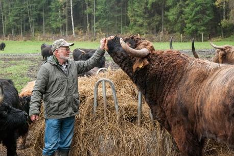 Nils-Erik Andersson elementissään, taputtelemassa lehmiään.